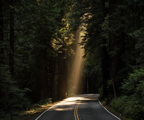 Road with sun shining through the trees
