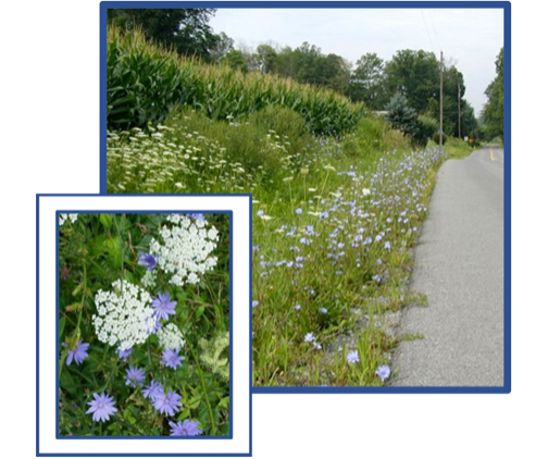 wildflowers on the side of the road